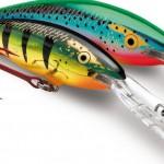 Bait-Queensland-fishing