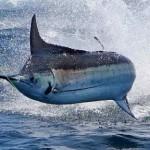 Queensland Fishing