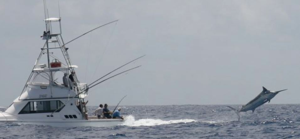 marlin-fishing-cairns-queensland